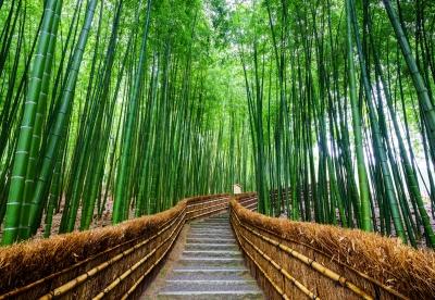 Photo: Ikunl, freedigitalimages.net